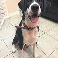 Adopt A Pet :: Miranda - Hagerstown, MD