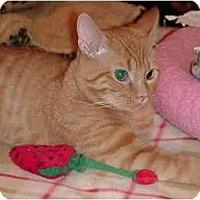 Adopt A Pet :: George - Chesapeake, VA