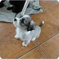 Adopt A Pet :: Gracie- adoption pending - Glastonbury, CT