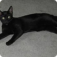 Adopt A Pet :: Dolly - Kirkwood, DE