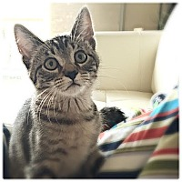 Adopt A Pet :: Pez - Plymouth, MN