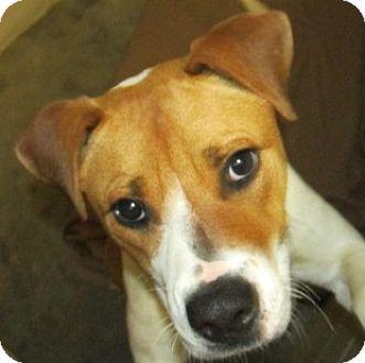 American Bulldog Mix Dog for adoption in Aiken, South Carolina - LOUISE