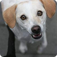Adopt A Pet :: Cassidy - Canoga Park, CA