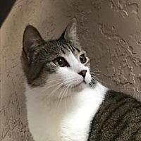 Adopt A Pet :: Velma - Ocala, FL