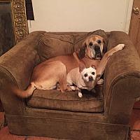 Adopt A Pet :: Fred & Ethel - San Diego, CA