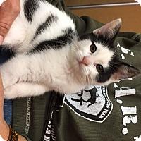 Adopt A Pet :: Manara (MP) - Little Falls, NJ