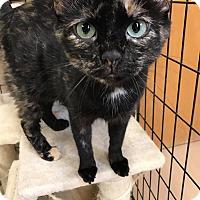 Adopt A Pet :: Pumpkin - Maryville, MO