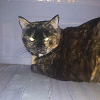 Adopt A Pet :: Jedda - Fort Scott, KS