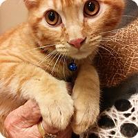 Adopt A Pet :: Elliott - Yorba Linda, CA