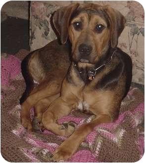 Hound (Unknown Type) Mix Dog for adoption in Franklin, North Carolina - Gypsie