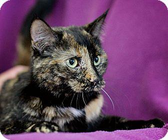Domestic Shorthair Cat for adoption in Port Hope, Ontario - Honey