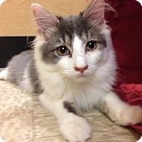 Adopt A Pet :: ERNIE - Temple, PA