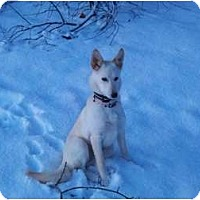 Adopt A Pet :: Andee - Great Small Companion - New Boston, NH