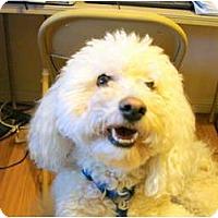 Adopt A Pet :: Mr. Whipple - Chandler, AZ