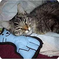 Adopt A Pet :: Billie Jean - Washington Terrace, UT