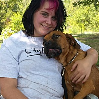 Adopt A Pet :: Briar- GreatFamilyDog - Gaffney, SC