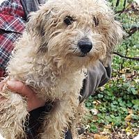 Adopt A Pet :: Perkins ADOPTION PENDING!! - Antioch, IL