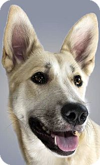 German Shepherd Dog Mix Dog for adoption in Dripping Springs, Texas - Polly