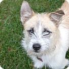Adopt A Pet :: Bindi