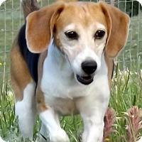 Adopt A Pet :: Glenda - Hartville, WY