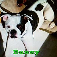 Adopt A Pet :: Bunny (Brady) - Port Clinton, OH