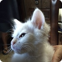 Adopt A Pet :: John Snow - La puente, CA