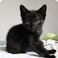 Adopt A Pet :: Anna - St. Louis, MO