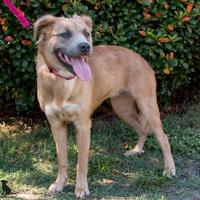 Adopt A Pet :: Rey - Savannah, GA