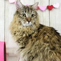 Adopt A Pet :: Rose - Harrisonburg, VA