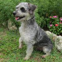 Adopt A Pet :: Dusty - Tyler, TX