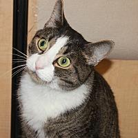 Adopt A Pet :: PRINCE - Clayton, NJ