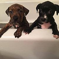 Adopt A Pet :: Jett - Jerseyville, IL