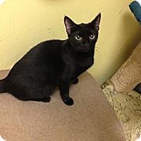 Adopt A Pet :: Sally - Fort Lauderdale, FL