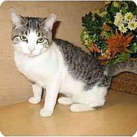 Adopt A Pet :: Linda - Jenkintown, PA