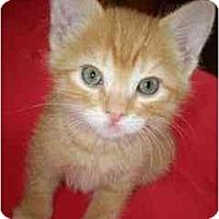 Adopt A Pet :: Bug - Davis, CA