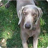Adopt A Pet :: Sierra - Eustis, FL