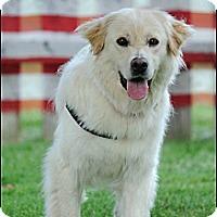 Adopt A Pet :: Nadia - Hilliard, OH