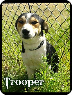 Beagle/Australian Cattle Dog Mix Dog for adoption in Estancia, New Mexico - Trooper