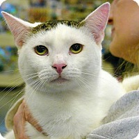 Adopt A Pet :: Elliott - Pittstown, NJ