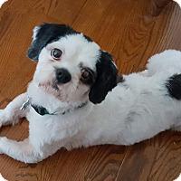 Adopt A Pet :: Peso - Alpharetta, GA