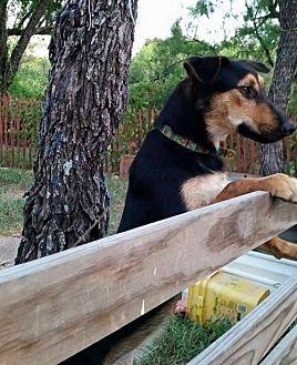 Terrier (Unknown Type, Medium) Mix Dog for adoption in Bertram, Texas - Tara