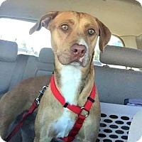 Adopt A Pet :: Bergan - Scottsdale, AZ