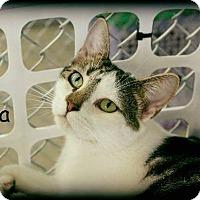 Adopt A Pet :: Nia - Waverly, NY