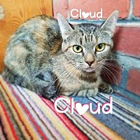 Adopt A Pet :: Cloud - York, PA