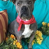 Adopt A Pet :: Roksia - Toluca Lake, CA