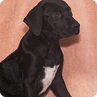 Adopt A Pet :: Quincy - Elmwood Park, NJ
