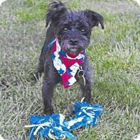 Adopt A Pet :: Voldemont (Volder) - Sharonville, OH