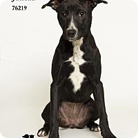 Adopt A Pet :: Juneau - Baton Rouge, LA