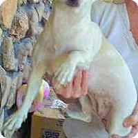Adopt A Pet :: Asia- ADOPTION PENDING - Boulder, CO