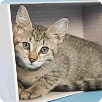 Adopt A Pet :: Sweet Heart - Glendale, AZ